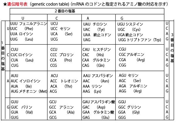 コドン アミノ酸